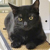 Adopt A Pet :: Gabriel - Georgetown, TX