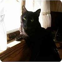 Adopt A Pet :: Salem - Lake Charles, LA