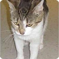 Adopt A Pet :: Karma - Jenkintown, PA