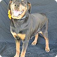 Adopt A Pet :: Petunia - Plano, TX