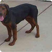 Adopt A Pet :: Titan - Chandler, IN
