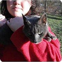 Adopt A Pet :: Lilly - Rancho Palos Verdes, CA