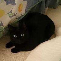 Adopt A Pet :: Tinsel - St. Louis, MO