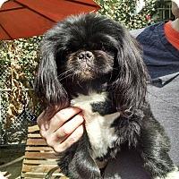 Adopt A Pet :: BO BO - SO CALIF, CA