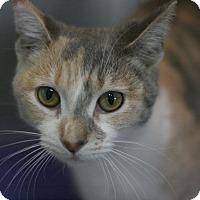 Adopt A Pet :: Silhouette - Canoga Park, CA