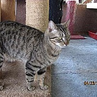 Adopt A Pet :: Zephyr - Conway, SC