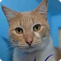 Adopt A Pet :: SUGAR - West Palm Beach, FL