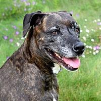 Adopt A Pet :: Kara - Vista, CA