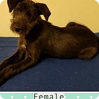 Adopt A Pet :: Dixie meet me 6/2 - Manchester, CT