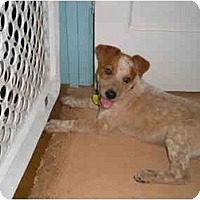Adopt A Pet :: Finley - Phoenix, AZ
