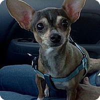 Adopt A Pet :: Katina - Sacramento, CA