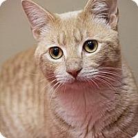 Adopt A Pet :: Kipp - Chicago, IL