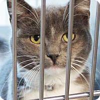 Adopt A Pet :: Jerry - Irvine, CA