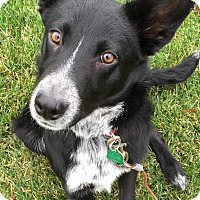 Adopt A Pet :: Nelson-New Update 1/24! - Midwest (WI, IL, MN), WI