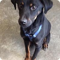 Adopt A Pet :: Dodge - Sparta, NJ