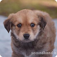 Adopt A Pet :: Kelley - Rosamond, CA