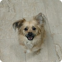 Adopt A Pet :: Mable Jane - Alpharetta, GA