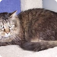 Adopt A Pet :: K-Price20-Joy - Colorado Springs, CO