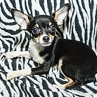 Adopt A Pet :: Damian - New York, NY