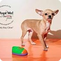 Adopt A Pet :: Curly Ray Cline - Shawnee Mission, KS