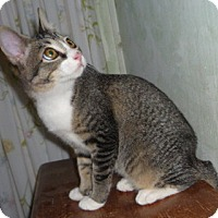 Adopt A Pet :: Sonora - Dallas, TX