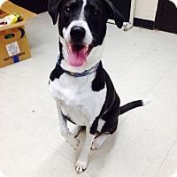 Adopt A Pet :: Zuni - Willington, CT