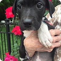 Adopt A Pet :: Veronica - Marietta, GA