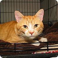 Adopt A Pet :: Porch - Milford, MA