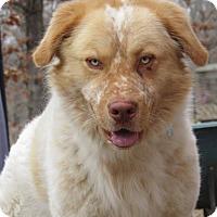 Adopt A Pet :: Levi - Kiowa, OK