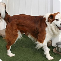 Adopt A Pet :: Beau - Salisbury, NC