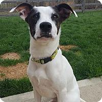 Adopt A Pet :: Nina - Florence, KY