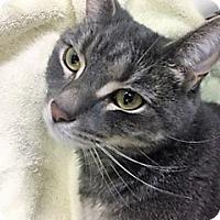 Adopt A Pet :: Romeo - Medina, OH