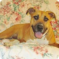 Adopt A Pet :: Roxy - Melbourne, AR