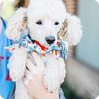 Adopt A Pet :: Dee Snider - Los Angeles, CA