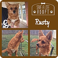 Adopt A Pet :: Rusty - Snyder, TX