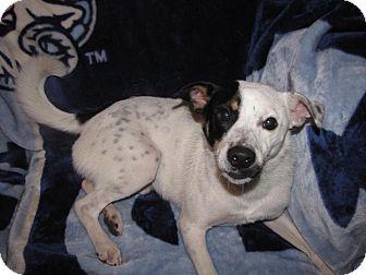 Hound (Unknown Type) Mix Dog for adoption in Hazard, Kentucky - Martin