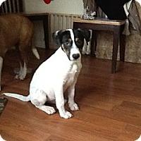 Adopt A Pet :: Little Billy - Apex, NC