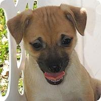 Adopt A Pet :: Bradley - La Habra Heights, CA