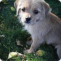 Adopt A Pet :: Jessica - Broomfield, CO