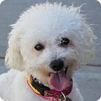 Adopt A Pet :: Jill - La Costa, CA