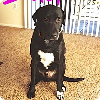 Adopt A Pet :: Bud - Scottsdale, AZ