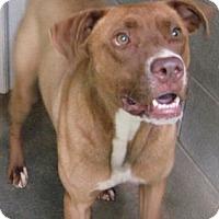 Adopt A Pet :: Lorenzo - Tahlequah, OK
