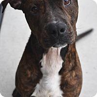 Adopt A Pet :: Razor - Prince George, VA