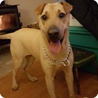Adopt A Pet :: Madge - Lomita, CA