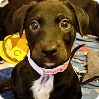 Adopt A Pet :: Flicka(ADOPTED!) - Chicago, IL