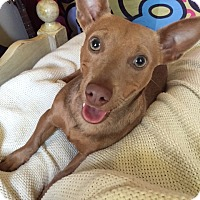 Adopt A Pet :: ANNIE - Los Angeles, CA