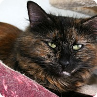 Adopt A Pet :: Patches - Republic, WA