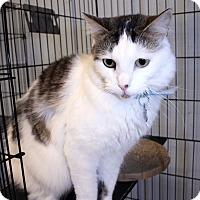 Adopt A Pet :: Simon - Lumberton, NC