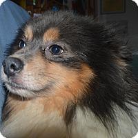 Adopt A Pet :: Sebastian - Prole, IA