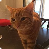 Adopt A Pet :: Toby - Wichita, KS